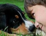 Ребенок просит завести животное
